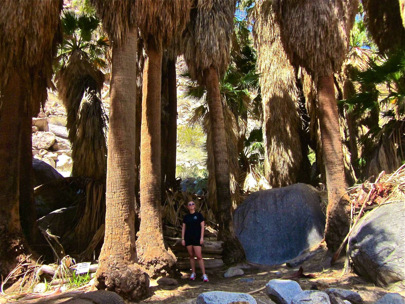 Borrego Palm Canyon Trail Anza Borrego Sp One Cool
