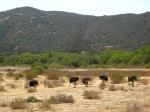 ostrichland