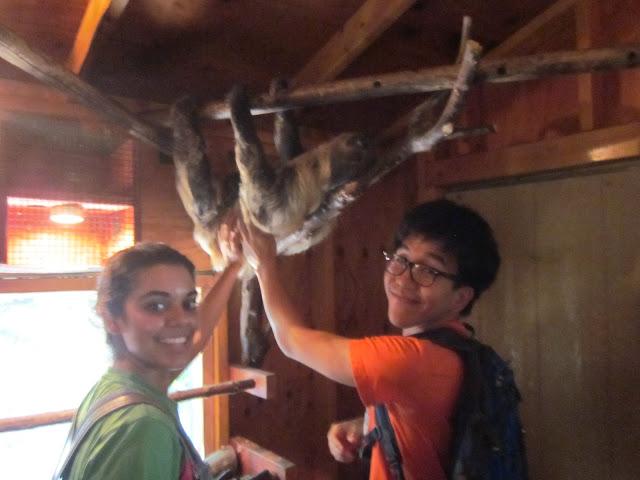 Petting a sloth. No big deal.