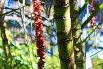 botanic garden balboa