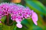 flower at balboa park