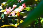 flower balboa park garden