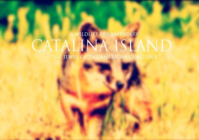 http://www.catalina-doc.com/