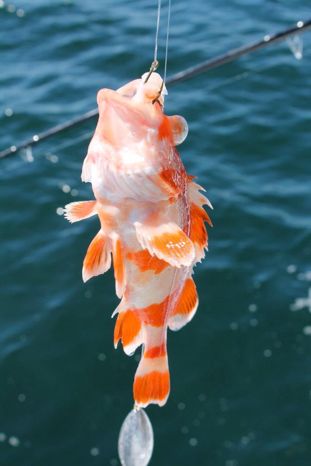 A stone fish, i think