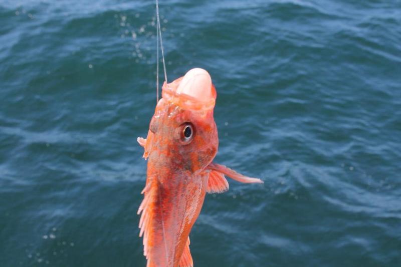 deep sea fishing newport